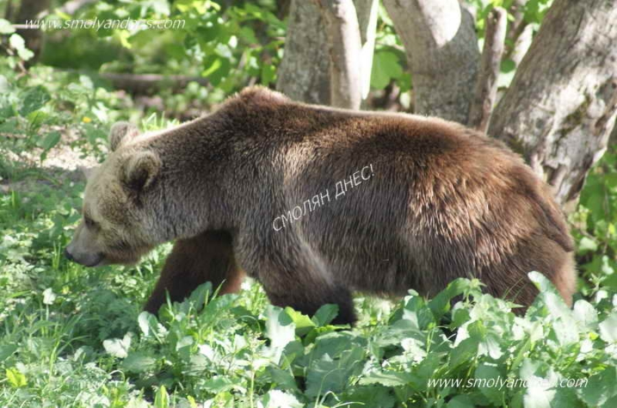 РИОСВ - Смолян установи 44 щети от мечки през септември