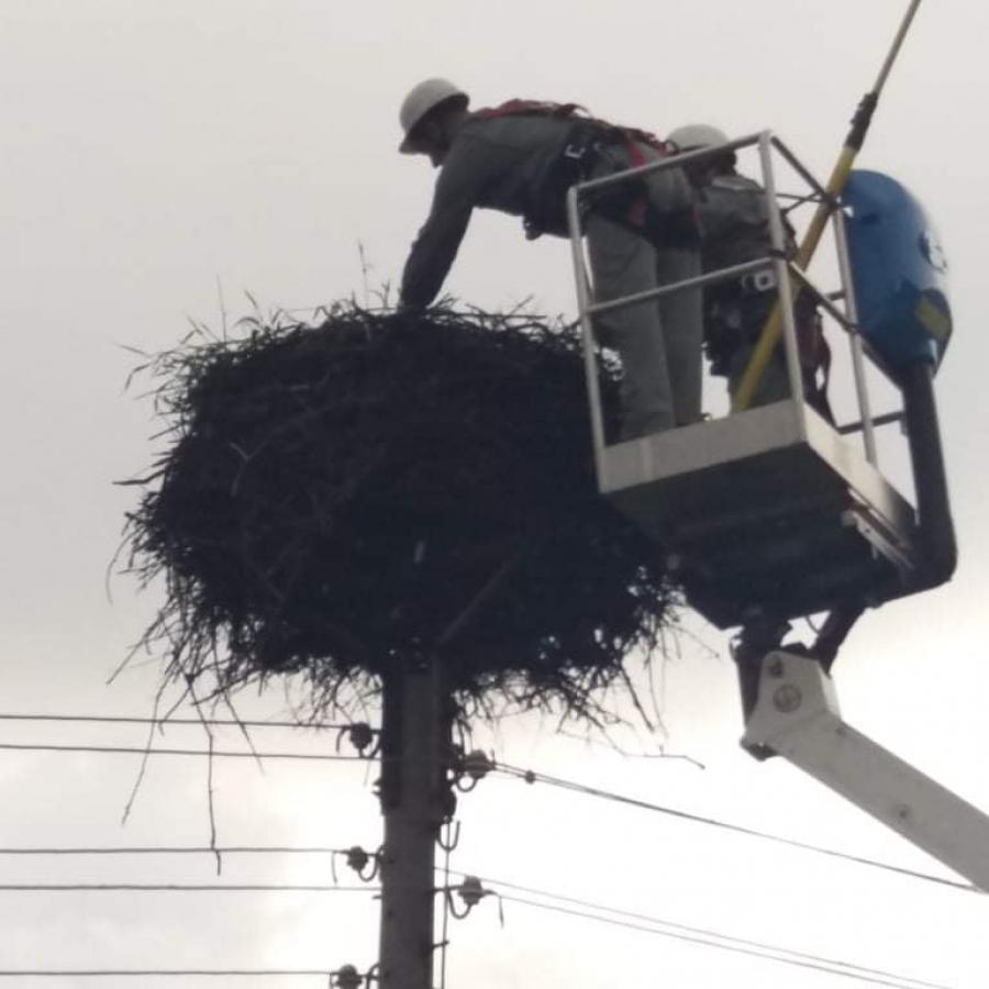 Малко щъркелче е върнато в гнездото му в село Борино