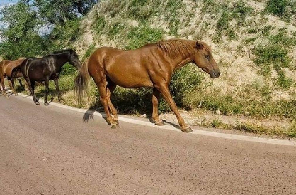 200 лева глоба за безстопанствено животно на пътя в Община Доспат