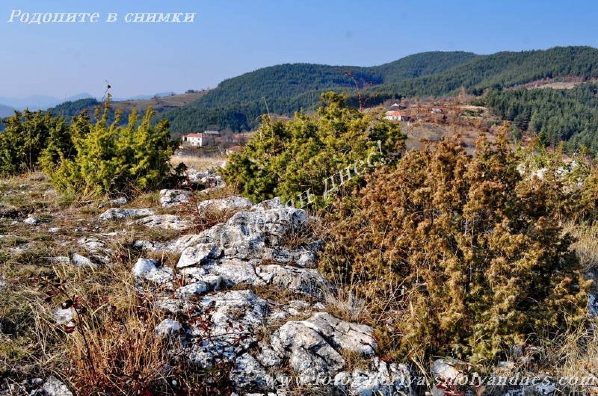 Белите камъни - село Старцево