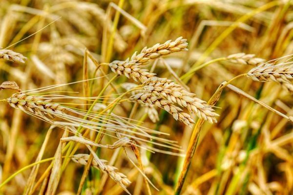 Парламентът гласува за правото на отказ от ГМО