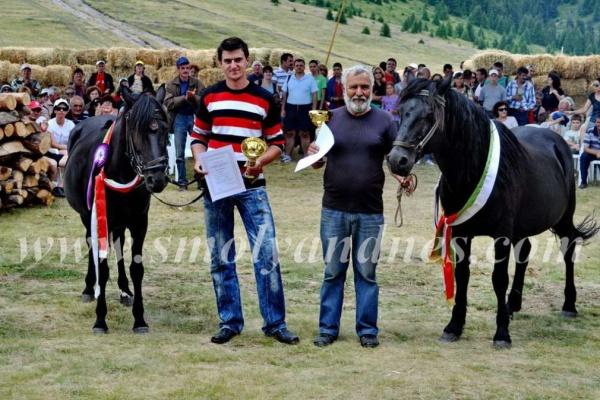Жребецът Гошо-Мрак и кобилата Роза станаха шампиони