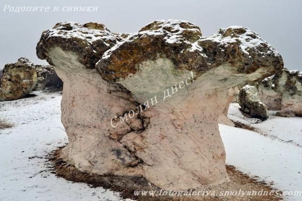 Каменни гъби - село Бели пласт